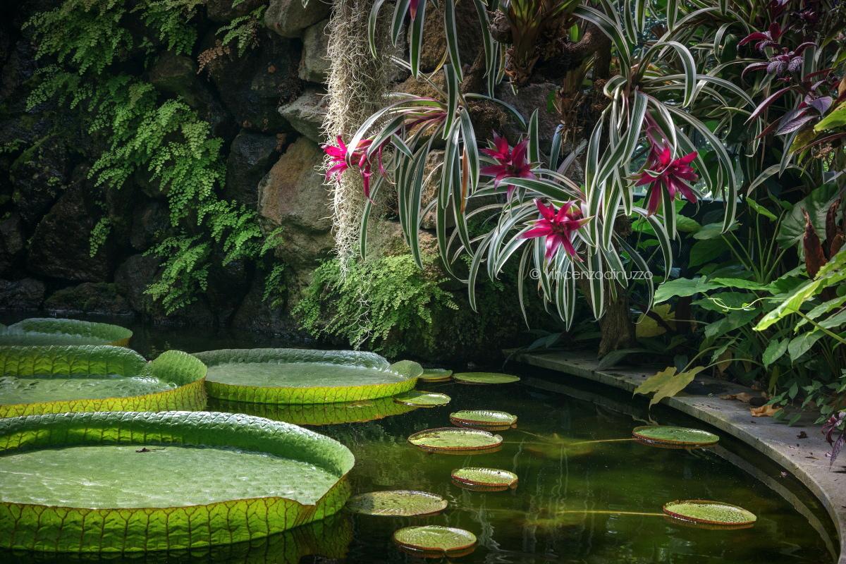 Il giardino di Lady Susan Walton