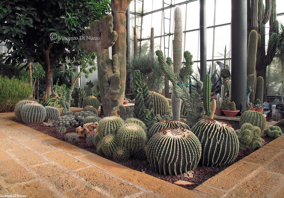 La cutura orto botanico - Serre da giardino fai da te ...